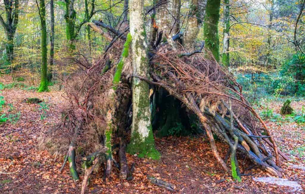 Lean to shelter in the forest