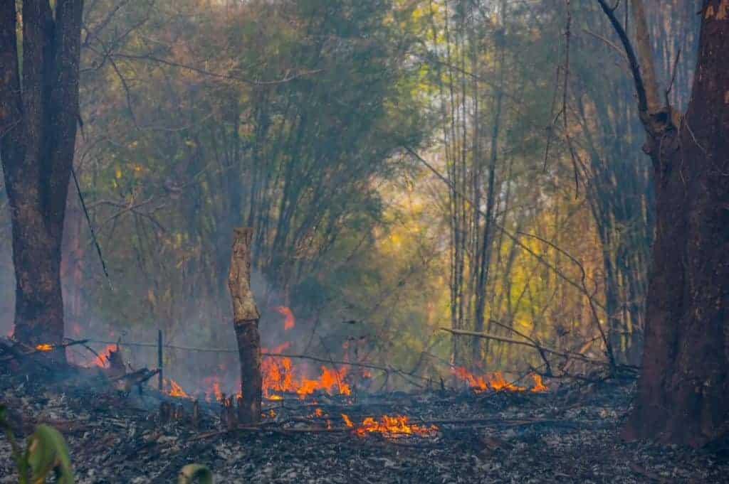 A forest fire dying down