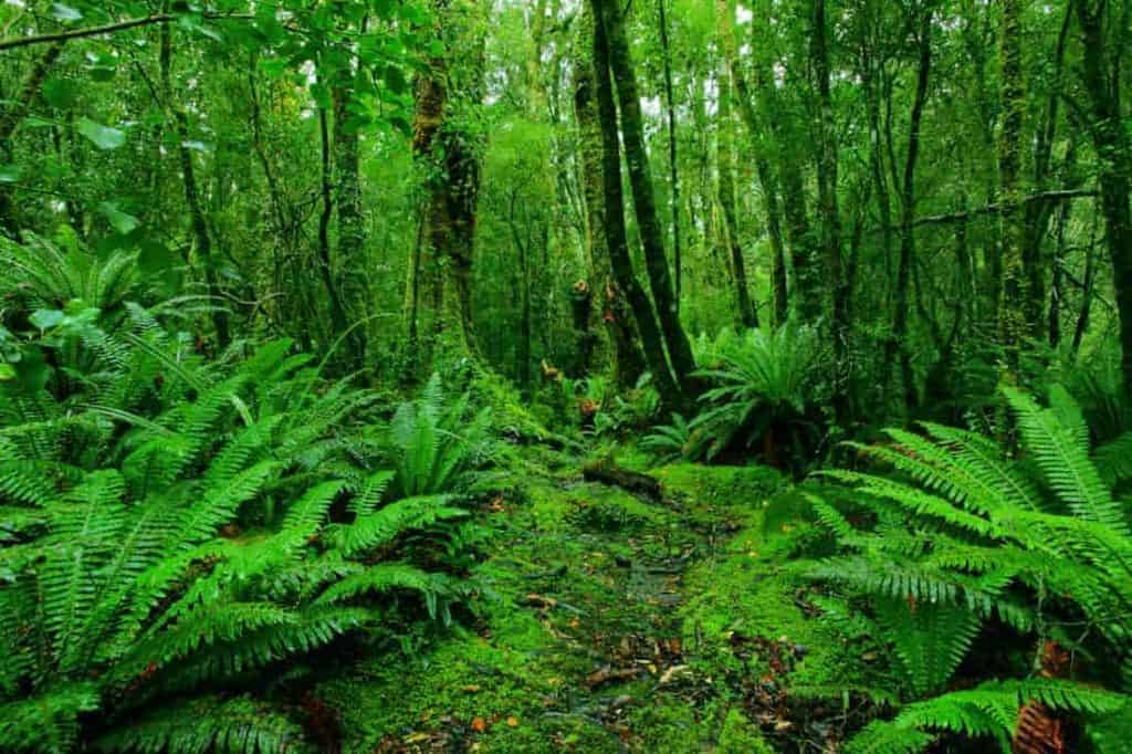 Jungle navigation and orientation is one of the essential jungle survival skills