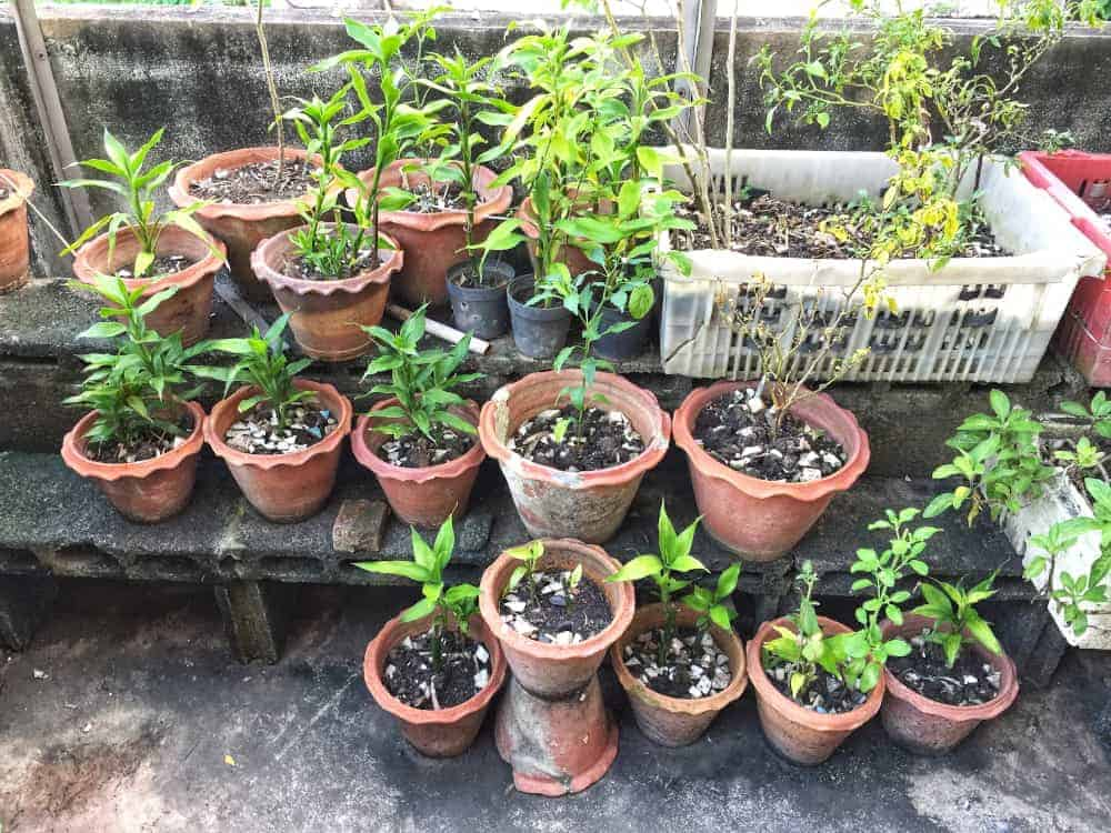 Various options to grow your plants in an urban garden: pots, plastic boxes, brick containers