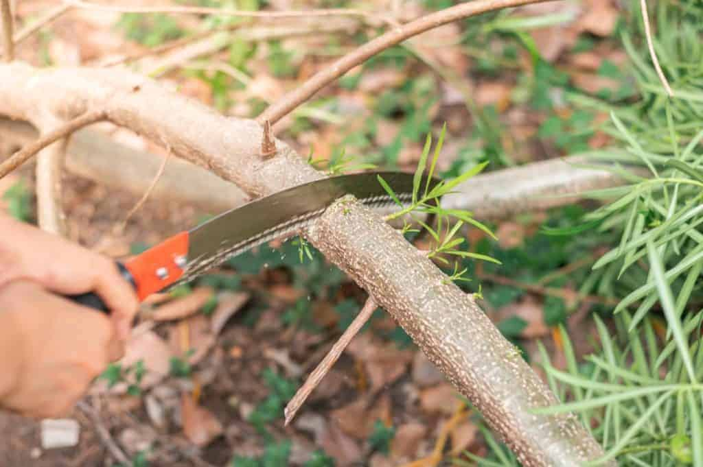 Person cutting a tree branch in the wilderness, using a survival saw