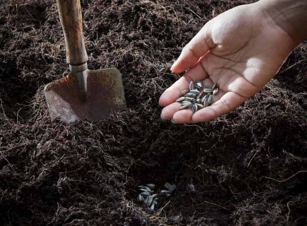 Person planting survival garden seeds