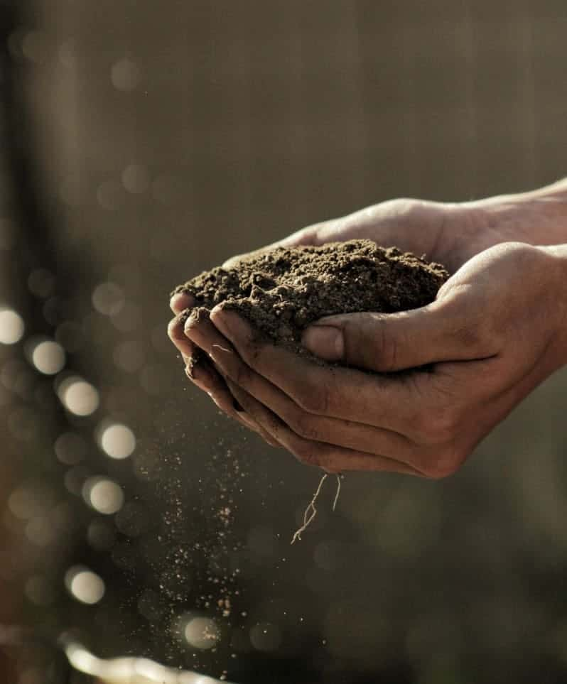 Person holding garden soil in their hands