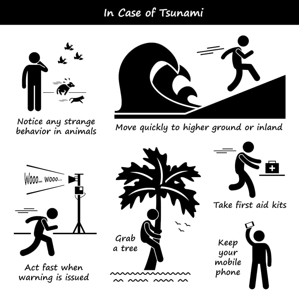 Illustration showing the survival steps you need to take: observe strange animal behaviour, get to high ground, have a tsunami survival kit, stay in tune to official tsunami communications